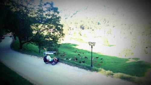 Jelenov greben, Olimje