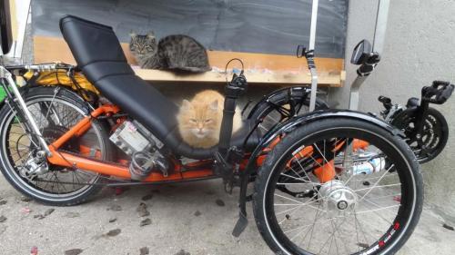 Cat shelter :)